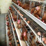 Poultry Equipment | Farm Machinery & Equipment for sale in Nairobi, Kasarani