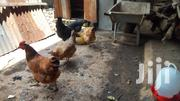 Kienyeji Chicken Live Or Ready To Cook | Livestock & Poultry for sale in Kiambu, Kikuyu