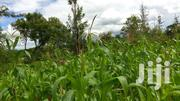 A 50 By 100 Plot At Ngatho,Only 7km From Thika-garissa Rd | Land & Plots For Sale for sale in Murang'a, Kakuzi/Mitubiri