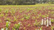 Half an Acre Land (0.20ha) on Sale in Oyugis,Ringa Area | Land & Plots For Sale for sale in Homa Bay, Central Kasipul