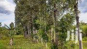 100x100 Plot on Sale in Rongo,Nyakwere.Hasara Centre. | Land & Plots For Sale for sale in Migori, Central Kamagambo