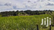 Half An Acre Land On Sale In Kangeso,Rongo. | Land & Plots for Rent for sale in Migori, Central Kamagambo