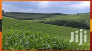 Tea Farms For Sale In Kericho | Land & Plots For Sale for sale in Kericho, Kapkugerwet