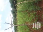 1 Acre Agricultural Land for Sale | Land & Plots For Sale for sale in Homa Bay, Central Kasipul
