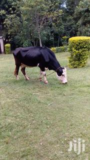Frieshian 3months Incalf | Livestock & Poultry for sale in Bungoma, Ndalu/ Tabani