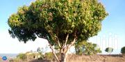 Land On Sale Matuga Ss 1 Acre 250,000/ | Land & Plots For Sale for sale in Kwale, Waa