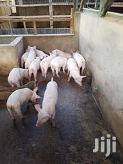 2.5 Month Old Piglets 4 Sale / Duroc-large White Pig Hybrid For Meat   Livestock & Poultry for sale in Laikipia, Nanyuki