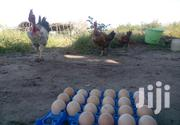 Kienyeji Eggs @450/Tray | Livestock & Poultry for sale in Kilifi, Malindi Town