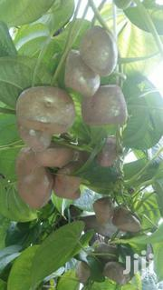 Aerial Yams Dioscorea Bulbifera | Feeds, Supplements & Seeds for sale in Homa Bay, Mfangano Island
