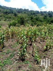 13acres For Sale | Land & Plots For Sale for sale in Nyeri, Naromoru Kiamathaga