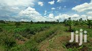 Half an Acre Land on Sale in Kangeso-Rongo.600k | Land & Plots For Sale for sale in Migori, East Kamagambo