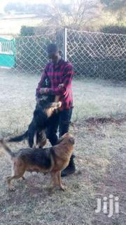 Dog Handling | Pet Services for sale in Laikipia, Igwamiti
