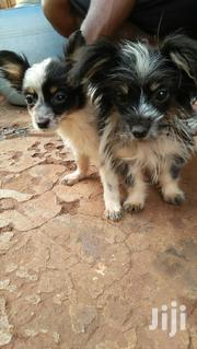Young Female Mixed Breed | Dogs & Puppies for sale in Kajiado, Ngong