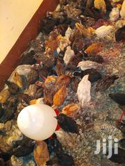 Kienyeji Chicks And Chicken | Livestock & Poultry for sale in Kisumu, Central Kisumu