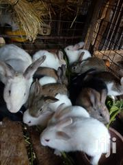 Im Selling Rabbits | Other Animals for sale in Nairobi, Komarock