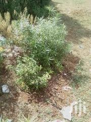 18acres For Sale Is Between Makutano And Sagana | Land & Plots For Sale for sale in Kirinyaga, Mutithi