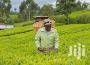 Tea Plantation On Sale | Land & Plots For Sale for sale in Nyamira, Nyansiongo