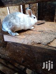 Home Rabbits | Livestock & Poultry for sale in Baringo, Koibatek