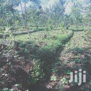 50 By 100 In Muthatari Tamarc | Land & Plots For Sale for sale in Embu, Mbeti North
