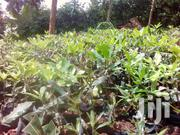 Let's Creat The Nature | Feeds, Supplements & Seeds for sale in Embu, Ruguru/Ngandori