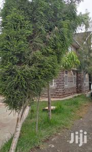 LANDSCAPING, Give Us A Call, We Come Do It For You, | Landscaping & Gardening Services for sale in Nairobi, Ruai