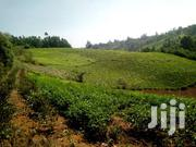 2.5acres Agriculture Land With Tea | Land & Plots For Sale for sale in Nyeri, Konyu