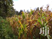 Quarter Acre Ondiri Kikuyu Kiambu for Sale . | Land & Plots For Sale for sale in Kiambu, Kikuyu