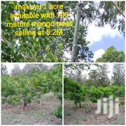 1 Acre At Makuyu With Mangoes  Trees | Land & Plots For Sale for sale in Murang'a, Makuyu
