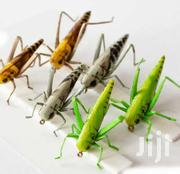 Flies Bass For Sale   Pet's Accessories for sale in Nairobi, Harambee