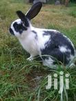 Rabbits (Weaned Bunnies) Pure White Rabbits Also Available | Other Animals for sale in Limuru East, Kiambu, Kenya