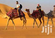 Horse And Camel Riding Service For Hire At Tour Event | Travel Agents & Tours for sale in Nairobi, Nairobi Central
