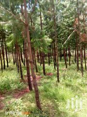 2.2 Acres Of Land With More Than 1200 Trees | Land & Plots For Sale for sale in Nakuru, Molo