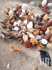 Improved Kienyeji | Livestock & Poultry for sale in Kakamega, Butsotso East