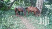 For Hire Contact Us And Experience The Fun | Other Animals for sale in Nairobi, Nairobi Central