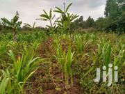 Land for Sale In | Land & Plots For Sale for sale in Kajiado, Ongata Rongai