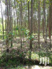 One Acre Land On Sale At Big Tree In Kitale With Trees There In. | Land & Plots For Sale for sale in Uasin Gishu, Kimumu