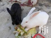 Rabbit Meat | Livestock & Poultry for sale in Mombasa, Majengo