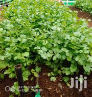 Dhania On Sale | Feeds, Supplements & Seeds for sale in Kiambu, Theta