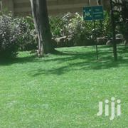 Zimbabwe Lawn Grass Plugs | Garden for sale in Nairobi, Roysambu