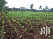 Vipingo Land for Sale | Land & Plots For Sale for sale in Mombasa, Tudor