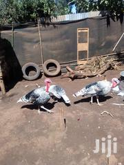 Two Birds Are Still Available For Sale By The End Of The Week   Livestock & Poultry for sale in Kiambu, Kikuyu