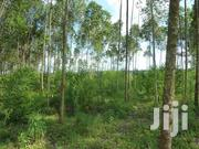 Land For Sale | Land & Plots For Sale for sale in Busia, Malaba North