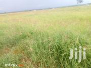 Boma Rhode Hay Grass Seeds | Feeds, Supplements & Seeds for sale in Machakos, Athi River