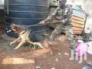 Dog Trainer, Security Consultant | Pet Services for sale in Nairobi, Karura