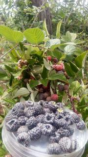 Black Raspberry | Feeds, Supplements & Seeds for sale in Nairobi, Nairobi Central