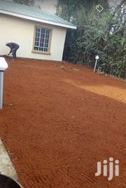 Carpet Grass Landscaping | Garden for sale in Nairobi, Nairobi Central