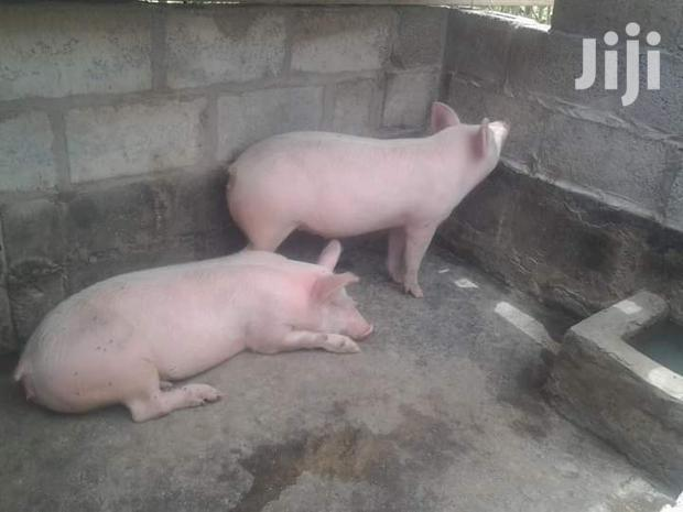 Archive: Buying And Selling Pigs