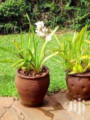 Landscaping And Garden Maintan | Garden for sale in Nairobi, Karen