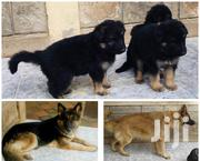 Baby Female Purebred German Shepherd Dog | Dogs & Puppies for sale in Nairobi, Nairobi Central