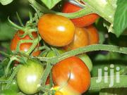 Am Selling Tomatoes At An Affordable Price | Meals & Drinks for sale in Nairobi, Nairobi Central